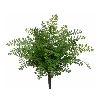 Maidenhair Fern 16in
