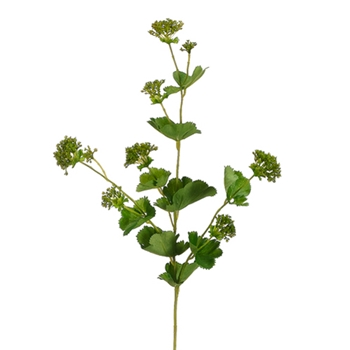 Lady's Mantle 22in