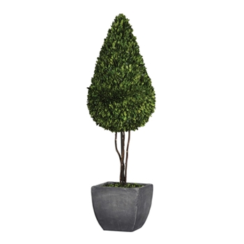 Boxwood Topiary (Preserved) 44H