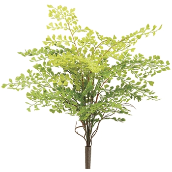 Maidenhair Fern 18in