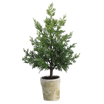 Juniper Tree Potted 18in