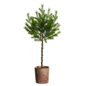 54. Green Spruce Topiary 31in