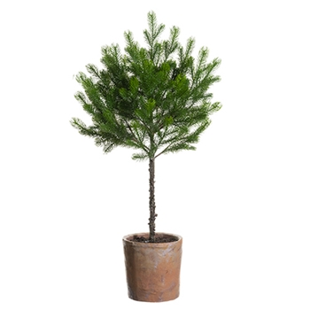 54. Green Spruce Topiary 37in