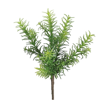 Rosemary Bush 11in