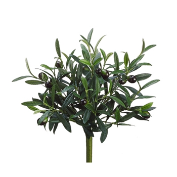 Olive Fruit Bush 14in