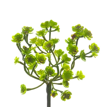 Sedum Spray Green 9in