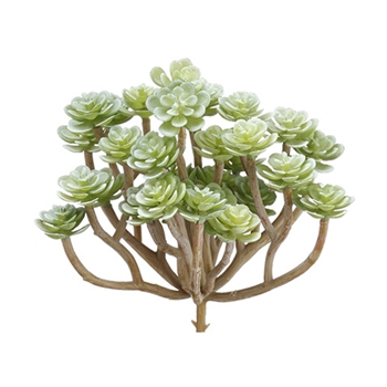 Sedum Bush Celery 6in