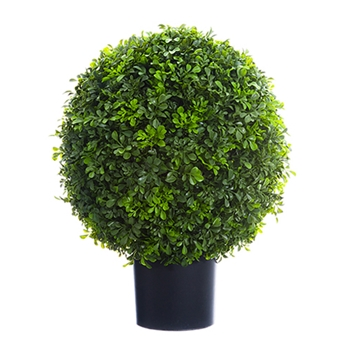 Boxwood Topiary 22in
