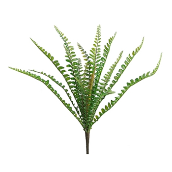 Sword Fern 12in