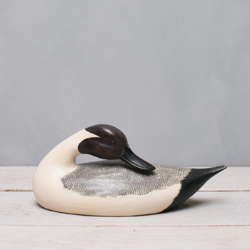 Duck Pintail 14.5W