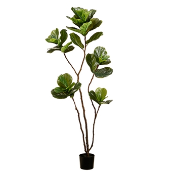 Fiddle Leaf Tree 68in