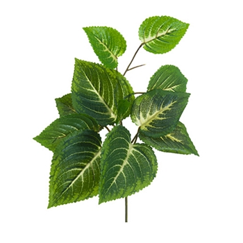 Coleus Leaf 11in