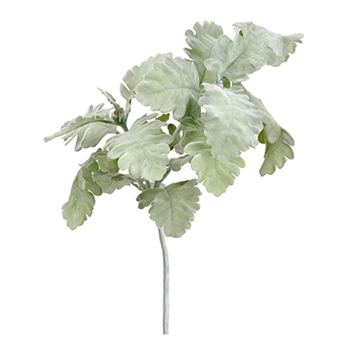 Dusty Miller Leaf 19in
