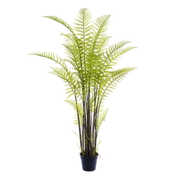 Forest Fern 71in