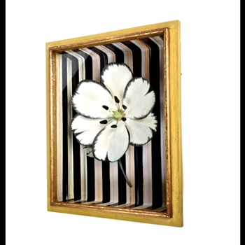 Shadow Box Tulip White 12W/16H