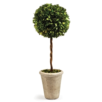 Boxwood Topiary 8W/23H 1Ball