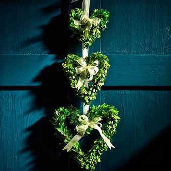 Wreath Boxwood Heart 6IN,8IN,10IN