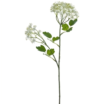 01. Thalictrum White 21IN