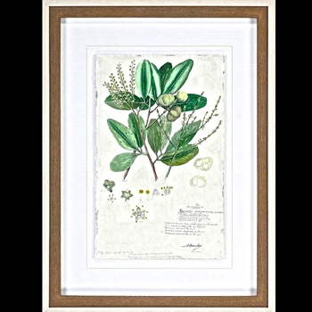 29W/39H Framed Print - Delicate Descubes III