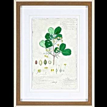 29W/39H Framed Print - Delicate Descubes II