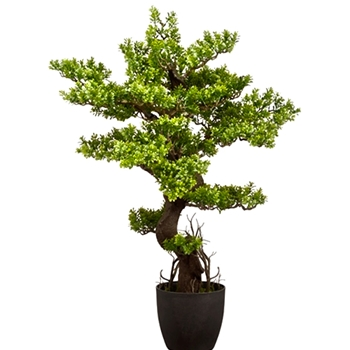 Bonsai - Boxwood Green 36in Ceramic