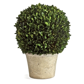 Boxwood Preserved Topiary Ball 16W/22H