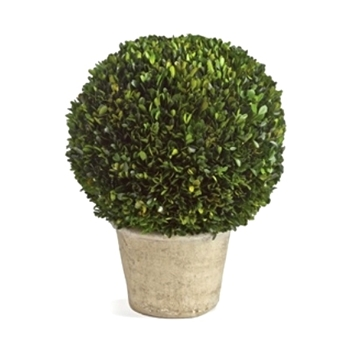 Boxwood Preserved Topiary Ball 12W/16H