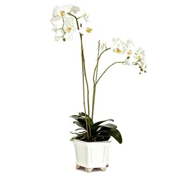 Phalaenopsis Potted Orchid White 10W/31H Barclay Butera