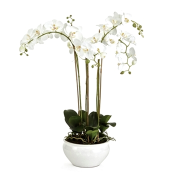 Phalaenopsis Potted Orchid White 10W/30H Barclay Butera