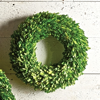 Boxwood Preserved Wreath Round 16in