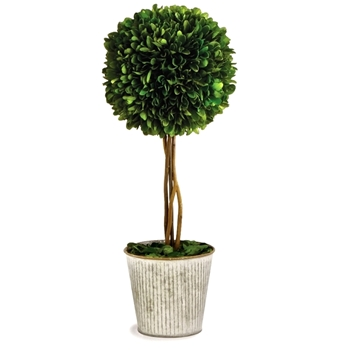 Boxwood Preserved Topiary 1Ball 6W/16H