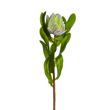 54. Protea Bud Green 19In