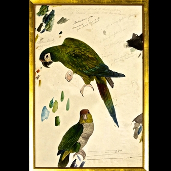 17W/25H Framed Print - Lear Two Parrots SM