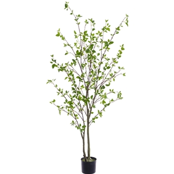 Cornus Tree 60in Plastic Pot