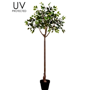 Ficus Topiary Tree 65In Plastic Pot UV Light Protection