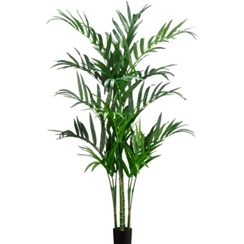 Kentia Palm Tree 6ft Plastic Pot