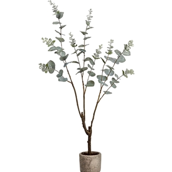 Eucalyptus Tree Sage 35in in Grey Pot