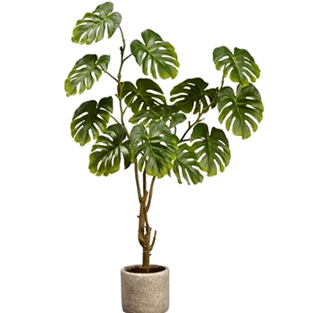 Philodendron Split Leaf Plant 28in Grey Pot