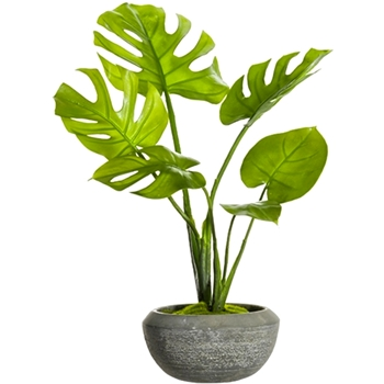 Philo Split Leaf Plant 28in Low Grey Bowl