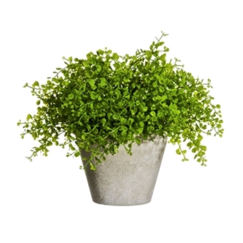 Fern Button Plant 10in Grey Pot