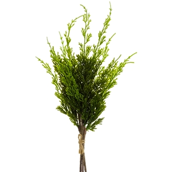 Cedar Cypress Bundle Green 16in