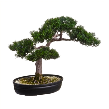 Bonsai Cedar Black Planter 16in
