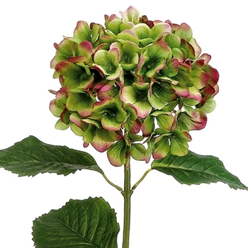 57. Green Rust Hydrangea 31in