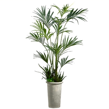 Kentia Palm Tree Tapered Fiber Cement Pot 101in