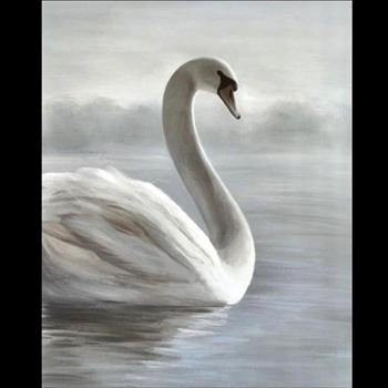 40W/50H Giclee - A Swan Lake - D'Alessandro L'eon