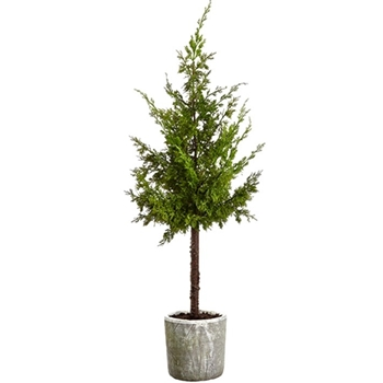 Juniper Tree Tabletop White Pot 48in Green