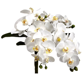 01. Bouquet - Phalaenopsis White Cascade 13in
