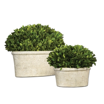 Boxwood Oval Topiary 12in