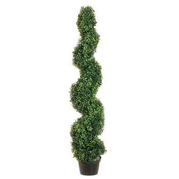 Boxwood Spire Topiary 4ft