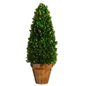 Boxwood Cone Topiary 20in